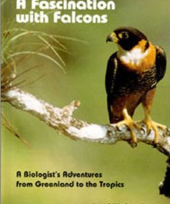 A fascination with Falcons