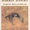 A passion for Harris Hawks