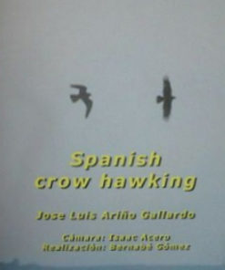 Spanish Crow Hawking